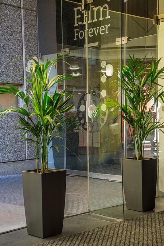 28 best indoor desk plants live plant office terrarium mini